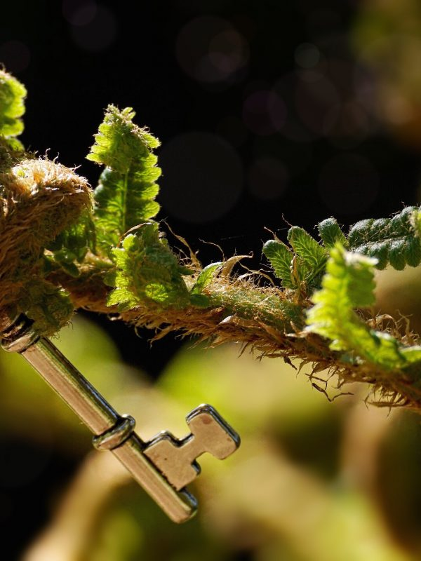 A key held in a plant shoot
